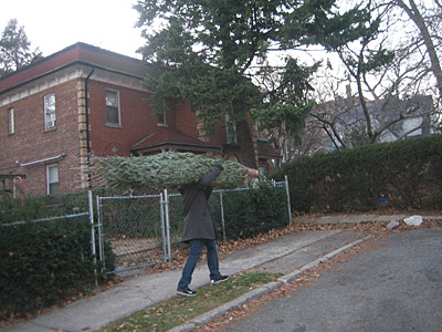 tree09adam.jpg